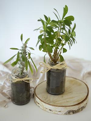 Vitabio-Recyclage-pot-verre